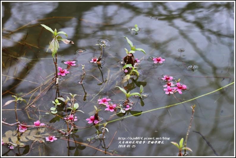 碧赫潭櫻花-2018-01-34.jpg