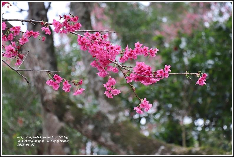 玉山神學院櫻花-2018-01-03.jpg