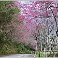 玉山神學院櫻花-2018-01-08.jpg