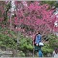玉山神學院櫻花-2018-01-09.jpg