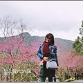 玉山神學院櫻花-2018-01-10.jpg
