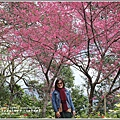 玉山神學院櫻花-2018-01-16.jpg