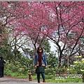 玉山神學院櫻花-2018-01-18.jpg