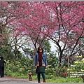 玉山神學院櫻花-2018-01-19.jpg