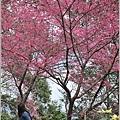 玉山神學院櫻花-2018-01-21.jpg