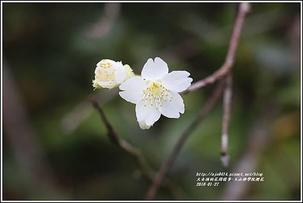 玉山神學院櫻花-2018-01-35.jpg