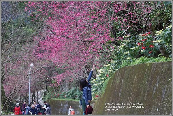玉山神學院櫻花-2018-01-58.jpg