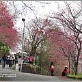 玉山神學院櫻花-2018-01-63.jpg