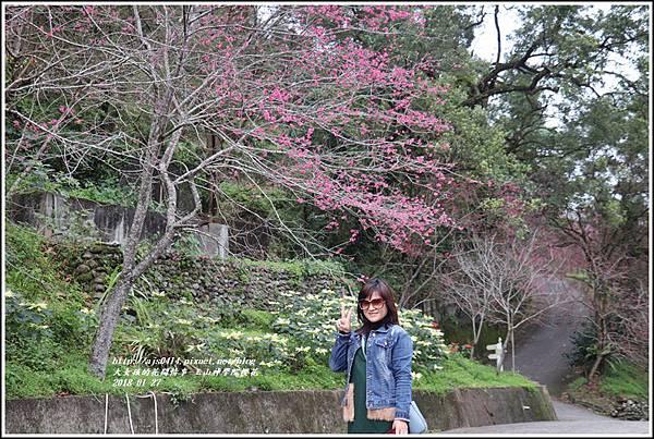 玉山神學院櫻花-2018-01-64.jpg