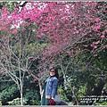 玉山神學院櫻花-2018-01-65.jpg