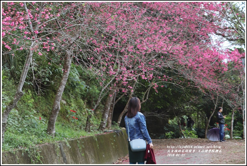 玉山神學院櫻花-2018-01-66.jpg