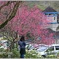 玉山神學院櫻花-2018-01-68.jpg