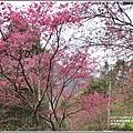 玉山神學院櫻花-2018-01-78.jpg