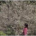 社區白梅-2018-01-04.jpg