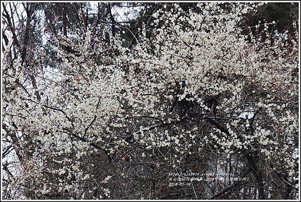 台14甲線(仁愛鄉公所)-2018-01-08.jpg