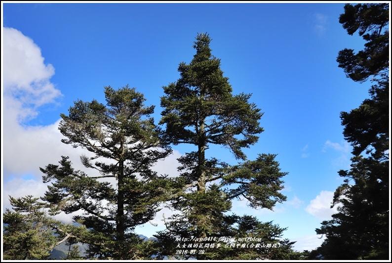 台14甲線(合歡山)-2018-01-41.jpg