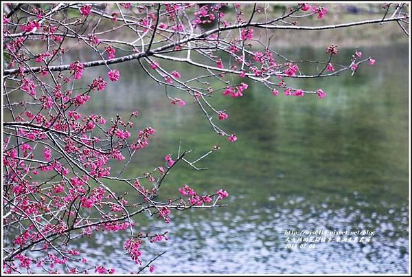 東湖生態農場-2018-02-09.jpg
