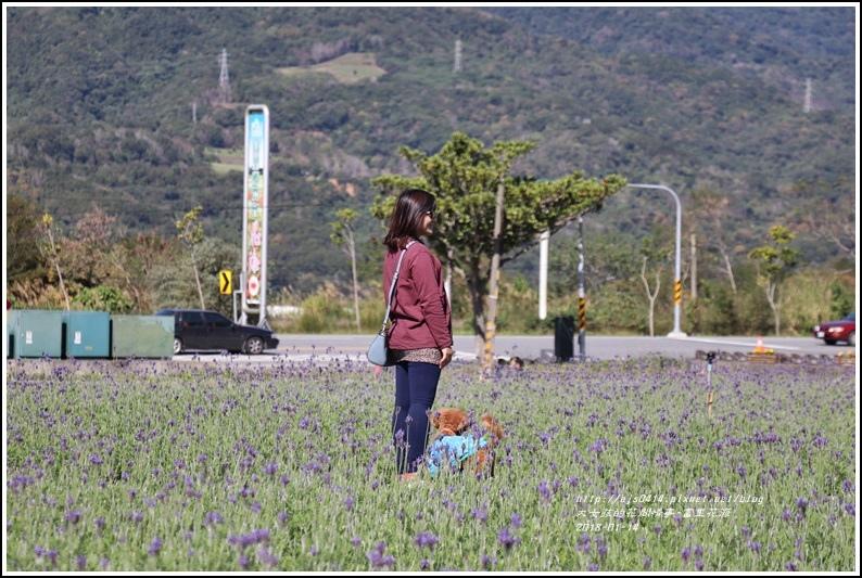 富里花海-2018-01-20.jpg