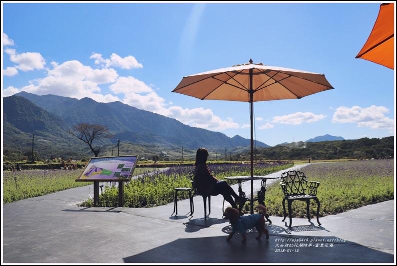 富里花海-2018-01-35.jpg