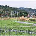 富里花海-2017-12-05.jpg