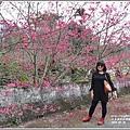 樹湖櫻花-2018-02-03.jpg