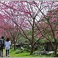樹湖櫻花-2018-02-08.jpg