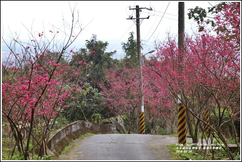 樹湖櫻花-2018-02-16.jpg