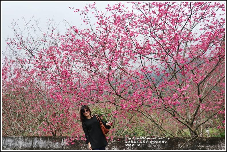 樹湖櫻花-2018-02-22.jpg