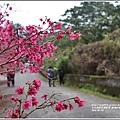 樹湖櫻花-2018-02-24.jpg