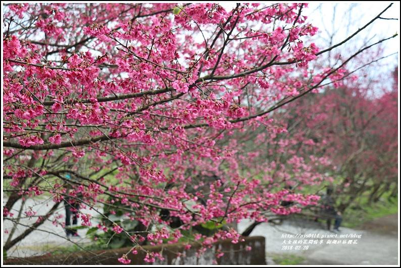 樹湖櫻花-2018-02-25.jpg