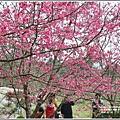 樹湖櫻花-2018-02-26.jpg