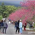 樹湖櫻花-2018-02-30.jpg