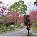 樹湖櫻花-2018-02-39.jpg