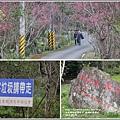 樹湖櫻花-2018-02-41.jpg