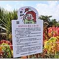 台東紅藜(台東森林公園)-2018-02-06.jpg