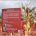 台東紅藜(台東森林公園)-2018-02-32.jpg