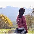 黃花風鈴木(富源國中旁水圳)-2018-03-34.jpg