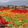 池上鄉農會四季花海-2018-02-28.jpg