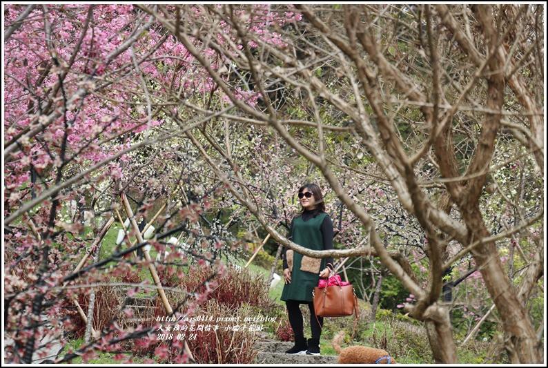 小瑞士花園-2018-02-61.jpg