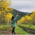 富源國中旁黃花風鈴木-2018-03-83.jpg