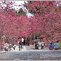 九族文化村櫻花季-2018-02-03.jpg