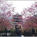 九族文化村櫻花季-2018-02-11.jpg