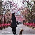 九族文化村櫻花季-2018-02-13.jpg