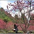 九族文化村櫻花季-2018-02-62.jpg