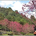 九族文化村櫻花季-2018-02-63.jpg