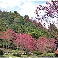 九族文化村櫻花季-2018-02-65.jpg