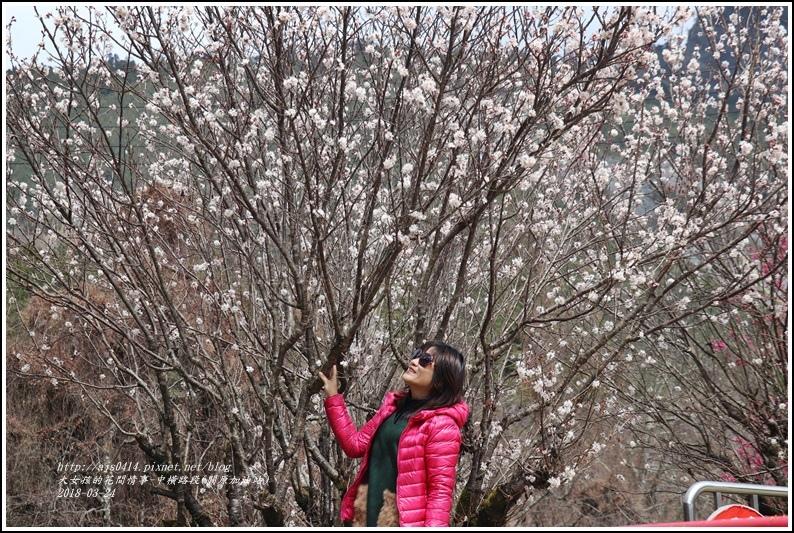 中橫路段(關原加油站)-2018-02-23.jpg