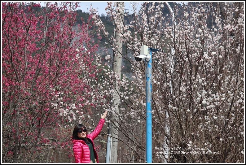 中橫路段(關原加油站)-2018-02-24.jpg