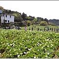 陽明山竹子湖-2018-03-06.jpg