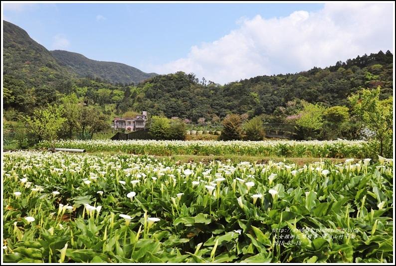 陽明山竹子湖-2018-03-09.jpg